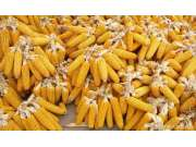 2017 財政部提出完善玉米生產者補貼制度