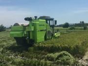 极光绿PL50水稻机 喜迎海南早稻开镰