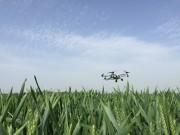 黄淮海地区小麦赤霉病呈大暴发趋势,翔农坚定做希望田野的守护者