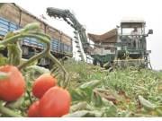 未来最大的农机蓝海市场非蔬菜机械莫属
