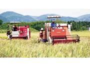 陣痛過后的農民專業合作社將迎美好未來