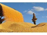 国家粮食局长:粮食供求矛盾已由数量不足变为结构性矛盾