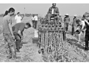 山东金乡县蒜农兄弟发明新型大蒜收割机