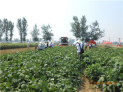 新發展、新技術、新產品——河北雷肯農業機械有限公司成功舉辦產品展示演示會