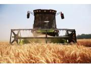 """大规模小麦跨区机收告捷五型新""""三夏""""亮点纷呈"""