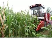 進攻中原一路暢跑 勇猛小小四玉米機供不應求