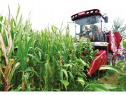"""东北玉米种植用户的福音——雷沃谷神""""小八行""""玉米机问世"""
