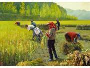 搞农业到底难在哪儿?