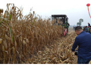 秋粮即将收获,如何让种粮农民有收益有底气?