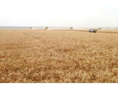 中储粮:今年小麦和早籼稻最低收购价、收购量均下降