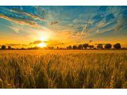 8月份全國農業生產穩定價格企穩