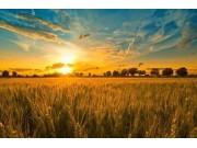 8月份,全国农业什么样?看这些数据就知道了!