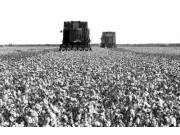 荊門市開展棉花全程機械化試驗示范略記