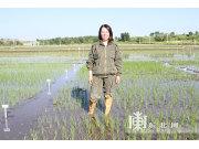 黑龙江水稻栽培直播技术迎来新时代