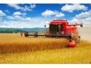 今年中國糧食總產量減產74億斤!國家統計局:仍屬豐收年景