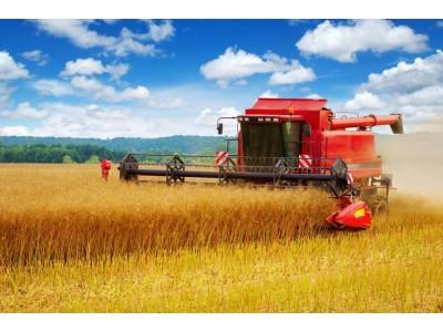 今年中国粮食总产量减产74亿斤!国家统计局:仍属丰收年景