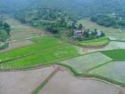 聶華林:丘陵山區也用上了大中型農業機械