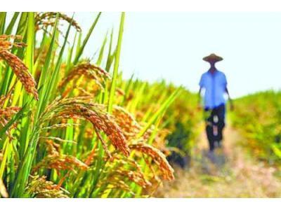 国家公布2018年稻谷最低收购价格