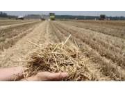 財政部鼓勵農作物秸稈制作有機肥每個試點補貼300萬