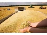 強烈關注!種糧大戶紛紛退還流轉來的土地,誰來種地?