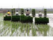 划重点!今年农业种植结构继续调优,怎么调?