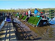 水稻机插秧同步侧深施肥技术入选全国2018年十项重大引领性农业技术