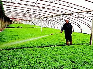 全国设施园艺机械化率平均仅33%,装备升级需求很大!