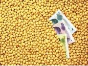 國產大豆迎來政策利好!未來一段時間,大豆價格保持持續上漲走勢!