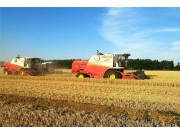全国大规模小麦跨区机收拉开序幕!大?#35895;?#37327;收割机占比将超过60%!