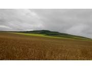 各主产区新小麦收购价格陆续公布 看看你家小麦收购价格是多少
