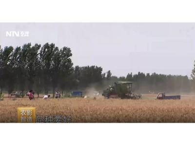 今年小麦大丰收,粮价高涨因屯粮!农民咋卖粮才划算?