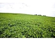 大豆收割機利好!今年大豆預計面積增加1000萬畝以上