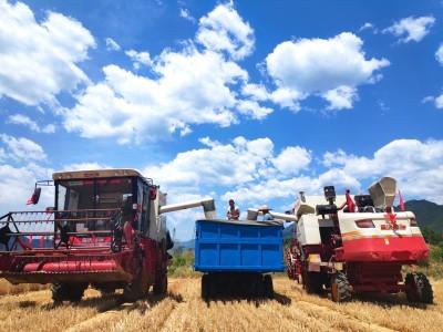 2020年河南小麥機收工作基本結束