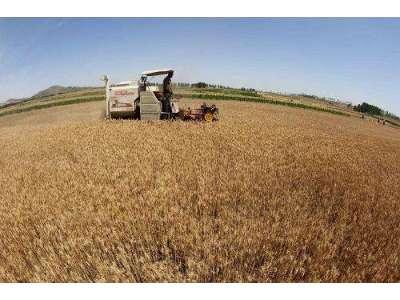 江蘇省夏糧收獲超九成 水稻播栽進度逾三成