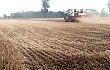 中联收获值得信任,不论是玉米收获机还是小麦收割机我都选他