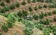 2020年度植保无人机行业发展报告