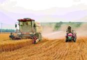 割麦污染环境?这里的农民割麦得花钱喷淋降尘