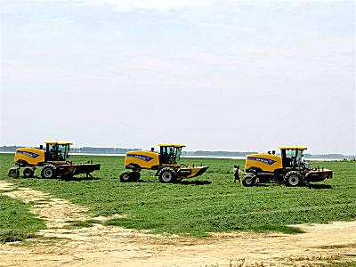 牧草收獲正當時,田間忙碌紐荷蘭