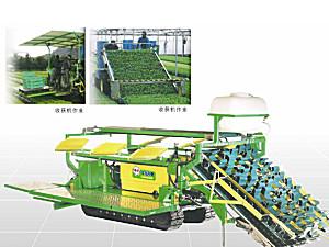 华龙4GZ-180蔬菜收获机