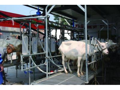 山东惠农奶羊挤奶厅