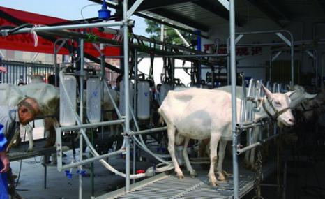 山東惠農奶羊擠奶廳