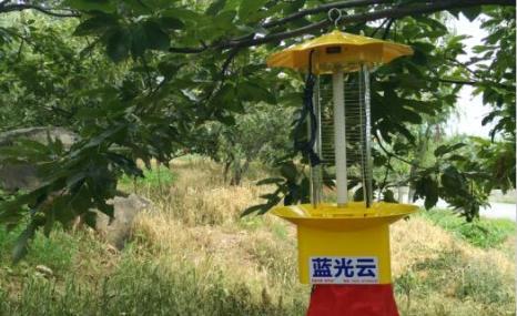 蓝光云LGY-1交流电杀虫灯