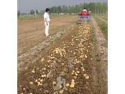 佳汇4U-2-1600马铃薯收获机