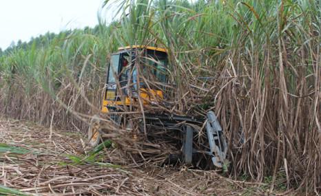 中熱農機SH15甘蔗收割機