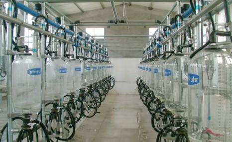 天润新东9JN-Y-10鱼骨式挤奶机