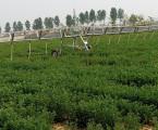 鑫農8SJY-2-32型水肥一體灌溉機