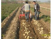 4US-70马铃薯收获机