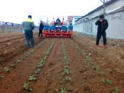 2ZBM-2蔬菜移栽机