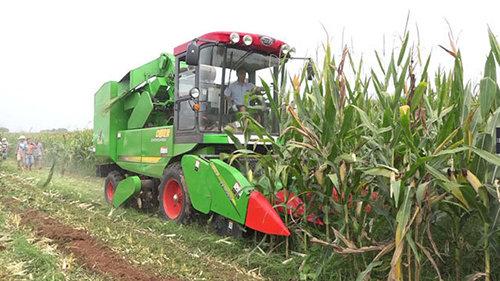 中國收獲4YZ-4F自走式玉米收獲機作業場景