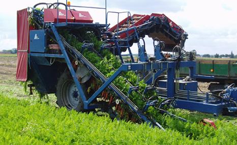 GRIMME(格立莫)T 200胡萝卜收获机